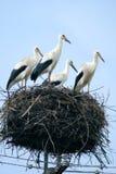 De familie van de ooievaar bij nest royalty-vrije stock afbeeldingen