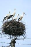 De familie van de ooievaar bij nest stock afbeelding