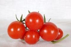 De familie van de tomaat stock foto