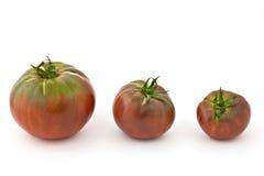 De familie van de tomaat stock foto's