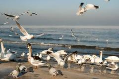 De familie van de vogel. Royalty-vrije Stock Foto