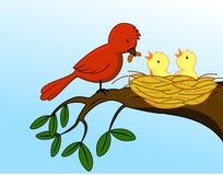De familie van de vogel Royalty-vrije Stock Afbeeldingen