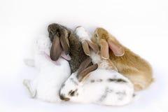 De familie van het konijn stock afbeelding