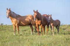 De familie van het paard royalty-vrije stock afbeelding