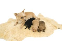 Hondenfamilie. Stock Foto's