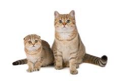 De familie van katten Stock Afbeeldingen
