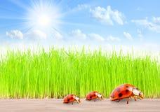 De familie van lieveheersbeestjes op de Weg. Royalty-vrije Stock Foto's