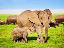 De familie van olifanten op savanne. Safari in Amboseli, Kenia, Afrika stock afbeeldingen