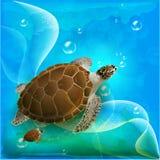 De familie van schildpadden Royalty-vrije Stock Afbeelding