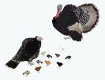 De familie van Turkije vector illustratie