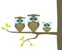 De familie van uilen Royalty-vrije Stock Foto