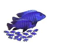 De familie van vissen stock afbeeldingen