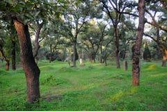 De Familiebegraafplaats van Confucius Stock Foto