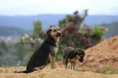 De familiehonden leven en spelend in zand†‹â€ ‹hoop, hond levende semi wildernis in binnenland bosdeel 3 stock afbeeldingen