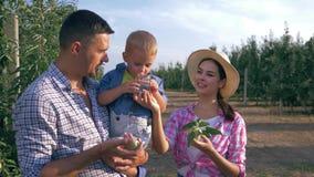 De familieidylle, jonge moeder draagt appelsap in glas voor een zoon die in de handen van zijn vader bij tuin is stock videobeelden