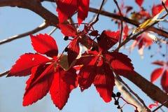De fantasie van de herfst Stock Afbeeldingen