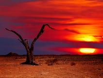 De fantasie van de woestijn stock afbeeldingen