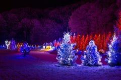 De fantasie van Kerstmis - pijnboombomen in Kerstmislichten Stock Afbeelding