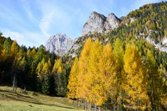 de fantastische herfst kleurde rood en groen de bergen is geschilderd als het schilderen Royalty-vrije Stock Afbeeldingen