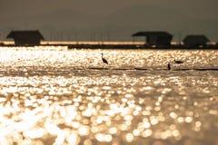 De fantastische toneelmeermening, zonsonderganglicht glanst neer op tropisch meer, het kleurrijke schitteren in water, Grote Aigr stock foto