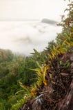 De fantastische tropische bosmening, mooie orchideeën is in bloei in de klip Luifel van altijdgroene bos en mistachtergronden Tha royalty-vrije stock afbeelding