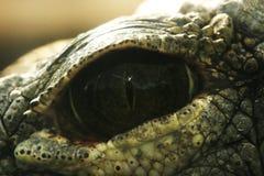 De fascinerende diepten van krokodillenoog stock afbeeldingen