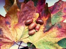 De fascinerende herfst Stock Afbeelding
