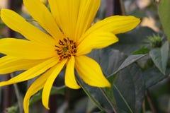 De faunalente van de bloem de mooie tijd op de steeg stock foto