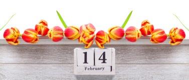 14 de febrero, tulipanes amarillos rojos para el día del ` s de la tarjeta del día de San Valentín Foto de archivo