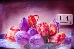 14 de febrero, tulipanes púrpuras rosados para el día del ` s de la tarjeta del día de San Valentín Imágenes de archivo libres de regalías