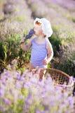De fee van de lavendel Royalty-vrije Stock Foto