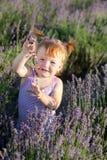 De fee van de lavendel Stock Afbeelding