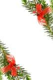 De feestelijke grens van Kerstmis met pijnboomboom Stock Afbeelding