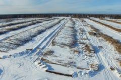 De felled bomen liggen onder de open hemel Ontbossing in Rusland Vernietiging van bossen in Siberië Het oogsten van hout stock fotografie