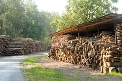 De felled logboeken van de bomen in de zaagmolen worden gestapeld royalty-vrije stock foto's