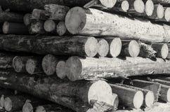 De felled logboeken van de bomen in de zaagmolen worden gestapeld stock foto