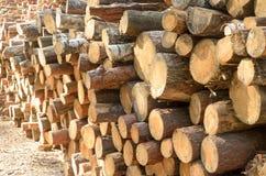 De felled logboeken van de bomen in de zaagmolen worden gestapeld stock afbeelding