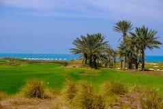 26 de fevereiro de 2018: Datas/palmeira no campo de golfe da ilha de Saadiyat, imagem de stock royalty free