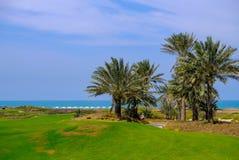 26 de fevereiro de 2018: Datas/palmeira no campo de golfe da ilha de Saadiyat, fotos de stock royalty free