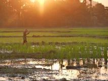 4 de fevereiro de 2017, Hpa-an Myanmar - menino asiático novo que anda através do campo do arroz imagens de stock