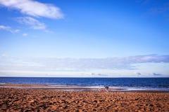 De fiets en de brede overzeese kust als achtergrond Stock Afbeelding