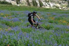 De fiets van de berg stock fotografie