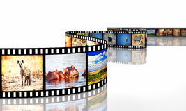 De film van Afrika Stock Afbeeldingen