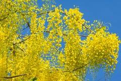 De fistelbloem van de kassieboom Stock Fotografie