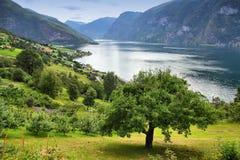 De Fjord van Aurland Stock Fotografie