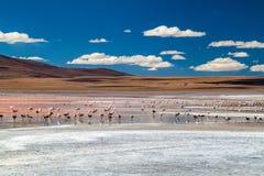 De flamingo's in rood hued Laguna Colorada meer stock foto
