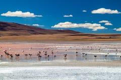 De flamingo's in rood hued Laguna Colorada meer stock foto's