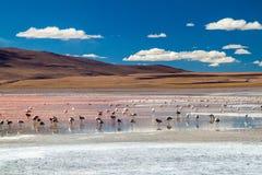 De flamingo's in rood hued Laguna Colorada meer stock afbeeldingen