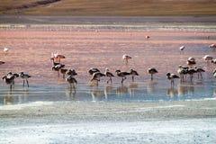 De flamingo's in rood hued Laguna Colorada meer stock afbeelding