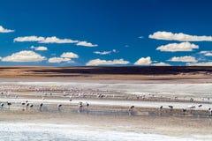 De flamingo's in rood hued Laguna Colorada meer royalty-vrije stock afbeelding